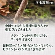 Cordyceps sinensis, Кордицепс в порошке на 20-33 дней